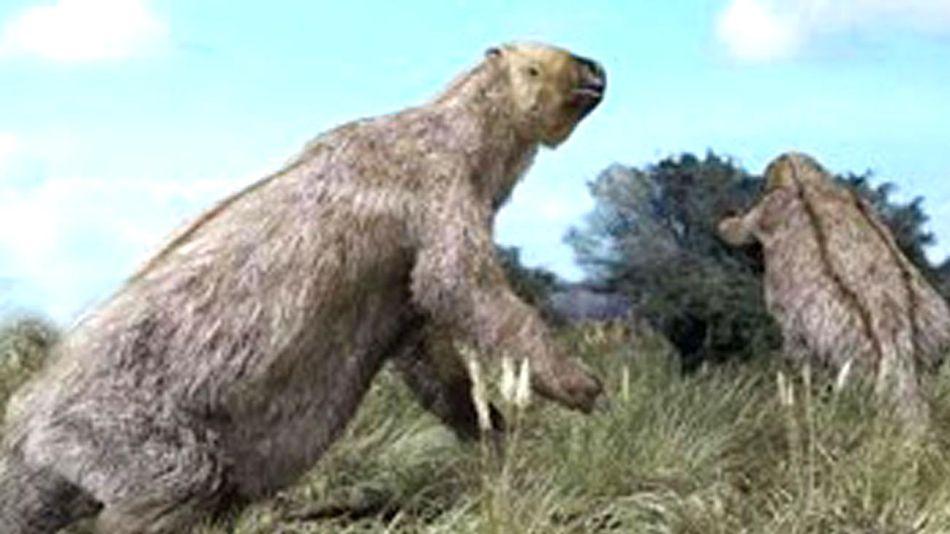 Megatherium o Megatherio 20210201
