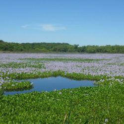 Esta zona constituye la reserva de agua dulce más importante de nuestro país.