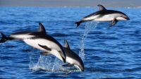 Los delfines se llevaron todas las miradas en Puerto Madryn