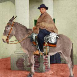 Con su mula Malacara, Brochero recorrió los sectores más recónditos de las sierras cordobesas, llevando su mensaje de fe y esperanza.nte se ganño añse g
