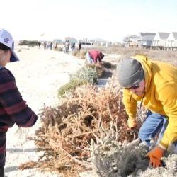 Las dunas de Surfside Beach ya han perdido más de 1,50 cm. de altura por la erosión de la playa y los fenómenos climáticos.