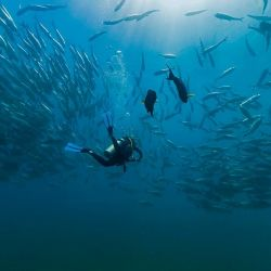 Snorkel o buceo, dos actividades que se pueden disfrutar de a dos en Los Cabos.