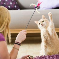 La vuelta a la normalidad para nuestros gatos requiere de una preparación previa.