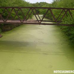 Las algas parecen vegetales pero no lo son.