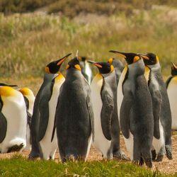 La Global Penguin Society lidera una iniciativa para crear 13 millones de hectáreas de áreas terrestres y marinas protegidas en Sudamérica.