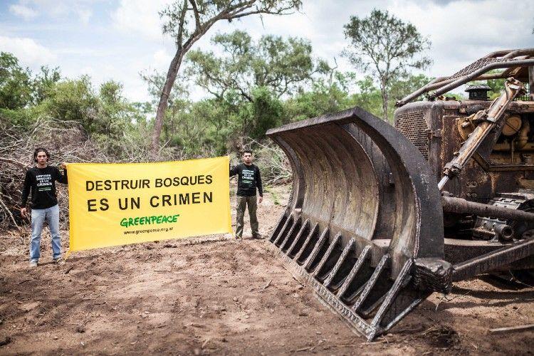 En las últimas tres décadas, se perdieron cerca de 8 millones de hectáreas de bosques.