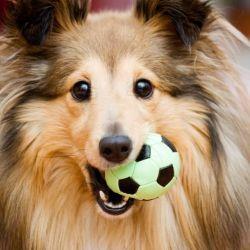 Una pelota duradera o un frisbee generalmente son regalos muy seguros y les permiten realizar ejercicios.