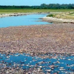 La eclosión más grande está en Mar Chiquita. Hay una importante mortandad de peces.