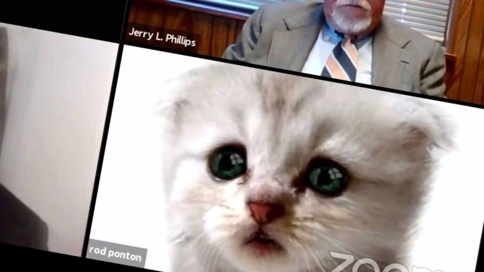Abogado usa un filtro de gato en una audiencia por Zoom