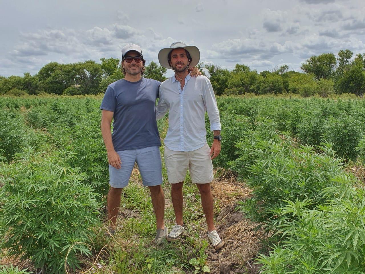 Noticias   Cannabis medicinal: el millonario negocio del oro verde