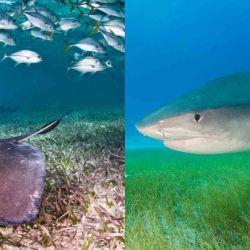 Desde 1970 a la fecha la población mundial de rayas y de tiburones disminuyó drásticamente.