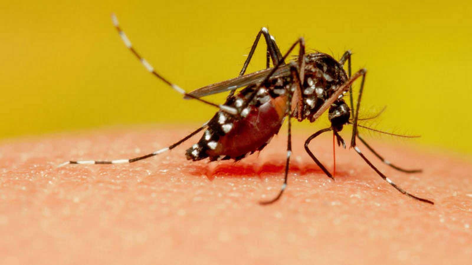 Explosión demográfica de mosquitos