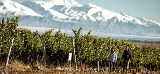 La importancia de saber hacer vinos