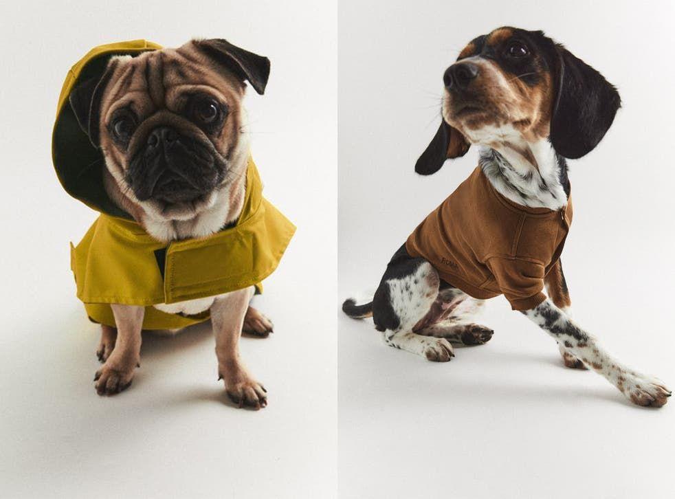Zara Pet Collection
