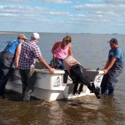 Tras el primer día de trabajo, realizado la semana pasada, desconocidos robaron de Las Tunas redes de pesca que eran utilizadas por los biólogos para el estudio.