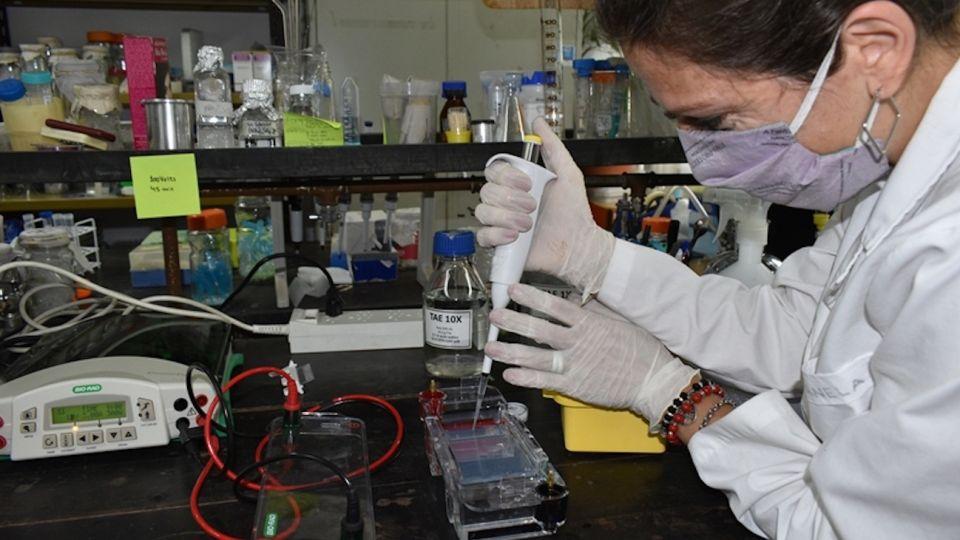 El Grupo de Nanomedicina Veterinaria está relacionado con el desarrollo de nanovacunas.