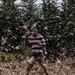 Un agricultor local caminando entre un enjambre de langostas del desierto en Meru, Kenia. - La Organización de las Naciones Unidas para la Agricultura y la Alimentación trabaja con una variedad de empresas de seguridad, logística y vuelos chárter de Kenia que han ampliado sus operaciones para rastrear de cerca los enjambres de langostas en África Oriental, antes de enviar equipos a áreas específicas para rociar los insectos con pesticidas y evitar daños. | Foto:Yasuyoshi Chiba / AFP