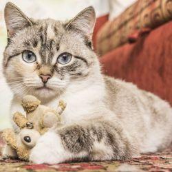 El origen del Día Internacional del Gato se debe a la memoria de Socks, el gato del ex presidente Bill Clinton que falleció el 20 de febrero de 2009.