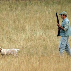 La elección del can es una de las decisiones más importantes que tiene que afrontar el cazador antes de emprender su tarea.