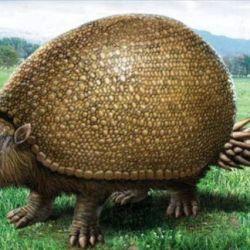 Los restos fósiles pertenecen a gliptodontes y antepasados prehistóricos del elefante y el caballo, que habitaron hace más de 10 mil años