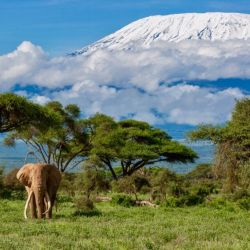 Parques Nacionales de Kenia para hacer avistaje de fauna nativa.