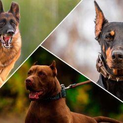 Hay perros que cuentan con un mayor instinto de protección territorial que otros.