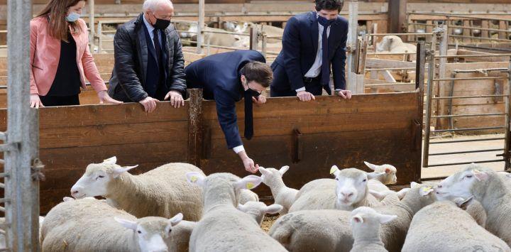 """El presidente francés Emmanuel Macron (2 ° a la derecha) visita la granja """"La Fermed'Etaules"""" con el ministro de Agricultura francés, JulienDenormandie (R) y el senador local FrancoisPatriat (2 ° a la izquierda) durante un viaje oficial de un día en Borgoña."""