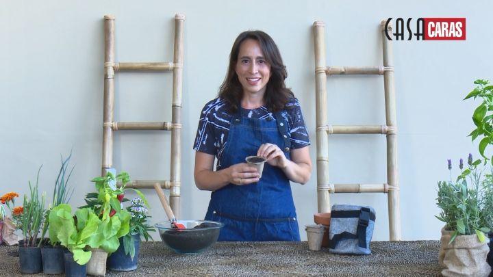 Consejos básicos para la siembra en macetas