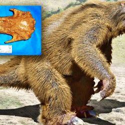 Los restos fósiles del megaterio hallado estaban en muy buenas condiciones.