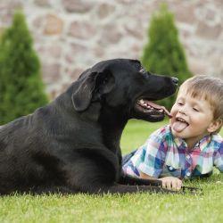 La masa corporal de cada perro tiene relación directa con la fuerza que puede alcanzar.