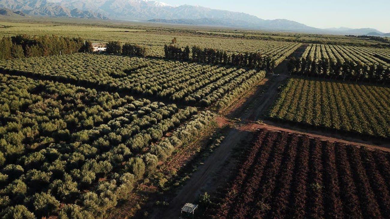 La poda de los olivos genera 5 millones de kilos de residuos en Valle de la Puerta.