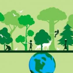 La fecha busca concientizar acerca de la gran importancia que tienen los animales y las plantas silvestres que habitan el planeta.