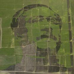 Esta fotografía aérea muestra una representación del retrato del padre del Jeque Nacional BangabandhuSheikh Mujibur Rahman hecho con arrozales en un campo de Sherpurupazila en Bogra.    Foto:AFP