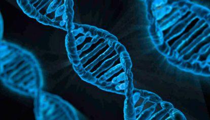 Genes. Hace dos décadas que se publicó el primer mapa del genoma humano. Pero le falta mucha información sobre diversidad genética.