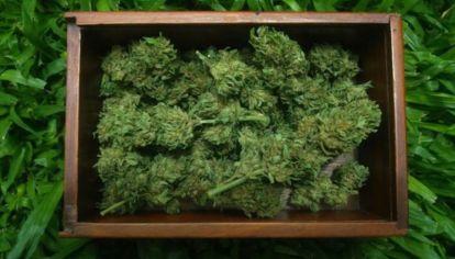 La industria mundial del cannabis medicinal triplicará su volumen de negocios en los próximos cinco años.