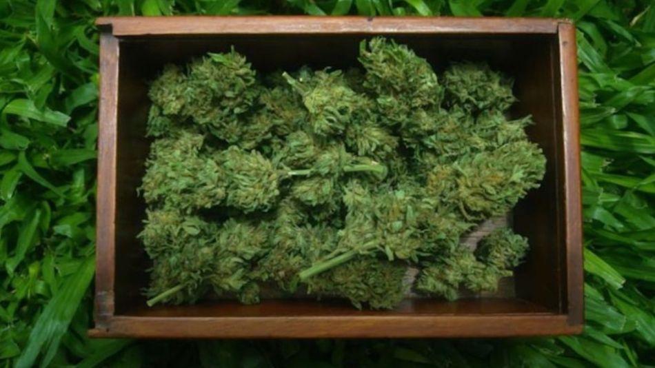 cannabis2021