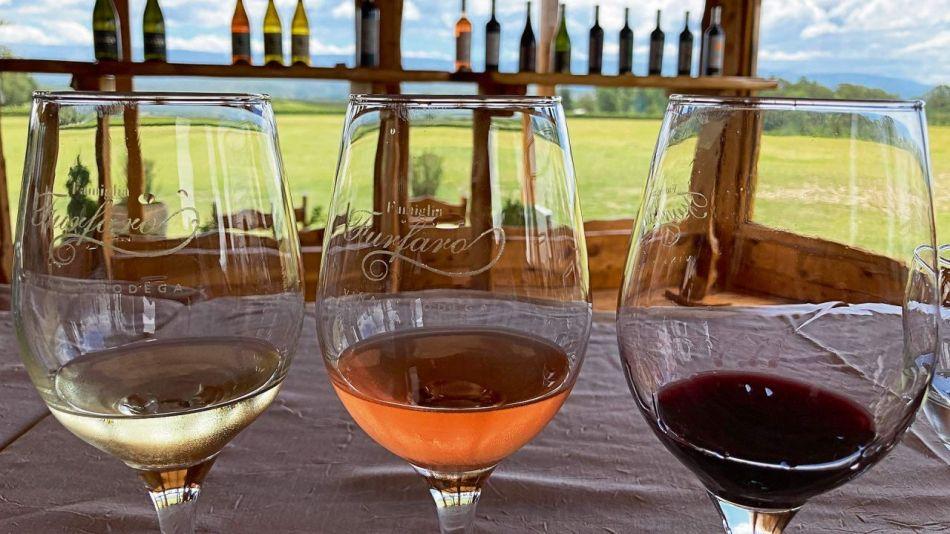 Guía para descubrir la ruta del vino cordobés