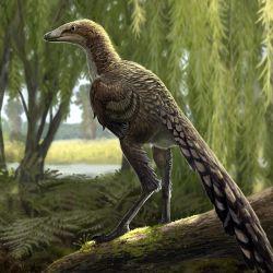El dinosaurio hallado tiene un increíble parecido a las aves actuales.
