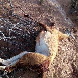 La caza furtiva está considerada un delito federal.