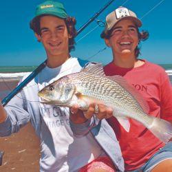 Las playas de Marisol en época estival son pròdigas en corvinas, peces de pique franco que se arriman a la costa buscando almejas.