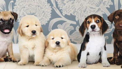 Si bien en realidad todos los perros son lindos, algunos pueden considerarse más pintones que otros.