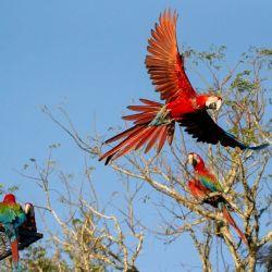 Se trata de una especie que estaba extinta desde hace 170 años en Corrientes.
