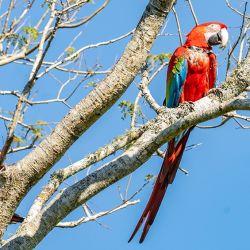 Las aves que llegaron a Corrientes provienen de distintos lugares.