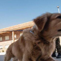 El olfato privilegiado de los perros les permite detectar el virus de manera altamente eficaz.