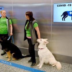 Los perros entrenados en El Salvador han mostrado gran efectividad para identificar compuestos asociados al coronavirus.