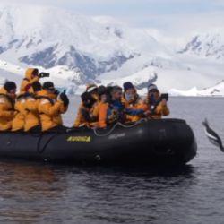 Las orcas siguieron al bote durante un rato y, finalmente, se rindieron ante el pingüino que, más tarde, volvió al agua.