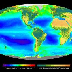 En el futuro, el sistema de la Tierra probablemente será un mundo de formas de vida anaeróbicas.