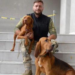 Existen diferentes perros entrenados según el tipo de búsqueda.