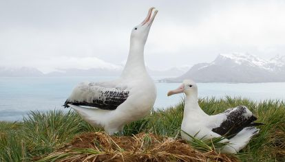Aves de la antartida
