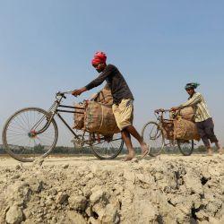 Agricultores de Bangladesh llevan sacos de patatas recién cosechadas en sus bicicletas en una aldea de Munshiganj. A medida que la temporada de invierno llega a su fin, los agricultores se ocupan de cosechar patatas en los campos. | Foto:Suvra Kanti Das / ZUMA Wire / DPA